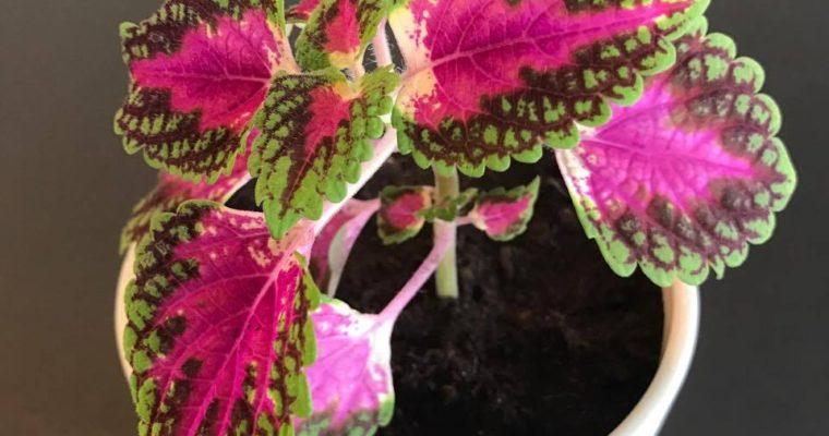 DIY – Formér dine planter